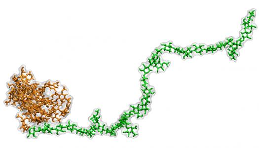 Unlocking Lignin for Sustainable Biofuel